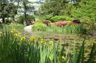 hammond lily pond _049